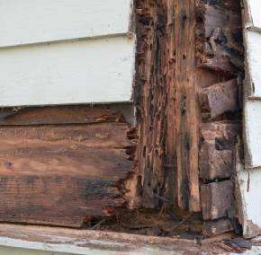 Rotting and damaged wood from termite infestation